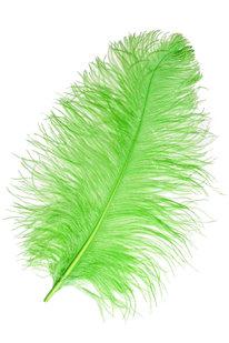GOP 42 PŠTROSÍ PEŘÍ zelené
